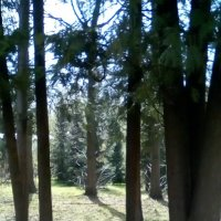 природа :: Иван