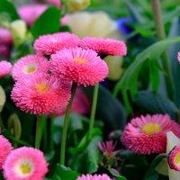 .....к сожалению не знаю названия этого цветка. :: Ирина ...............