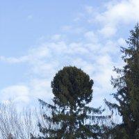 Вот такое деревцо :: Serega
