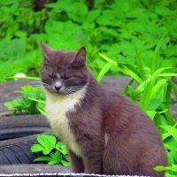 Cat :: Петр Ваницын