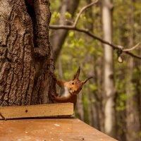 А Где орехи ? :: GALINA