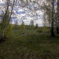Дивная красота рязанской окраины :: Константин Тимченко