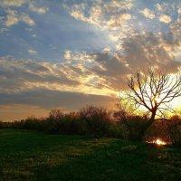 Свет майского заката.. :: Юрий Анипов