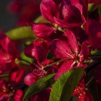 весна красна :: Марина Ринкашикитока