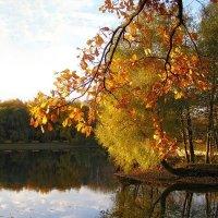 осень в Терлецком парке :: Анна Воробьева