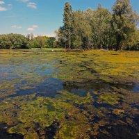 Пруд в боннском парке :: Alexander Andronik