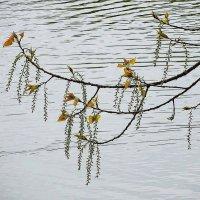Майское ожерелье над озером :: Маргарита Батырева