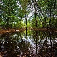 Когда весной пришла вода... :: Павел Петрович Тодоров