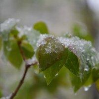 Зима недаром злится, Прошла ее пора — Весна в окно стучится И гонит со двора. :: Сербина Анна