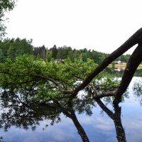 дерево в воде :: Ольга (Кошкотень) Медведева