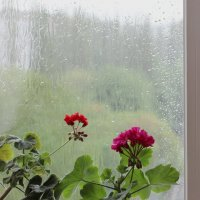 Дождь. :: Ирина Королева