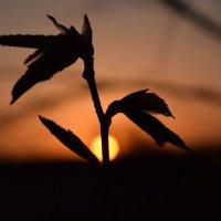 """""""Каждый рассвет единственный в жизни"""" :: Мария Минченко"""