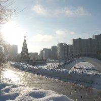 Редкое декабрьское солнце :: Жанна Литуева