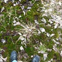 Геометрия листьев. :: Марина Китаева