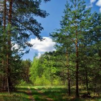 Весны лесные откровения... :: Лесо-Вед (Баранов)