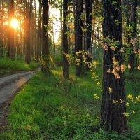 Вновь солнце вечностью мгновений... :: Лесо-Вед (Баранов)
