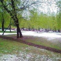 Снег в мае) :: Наталья Чернушкина