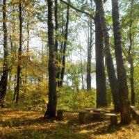 Осень :: Андрей .