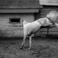 Алмаз :: Кристина Щукина