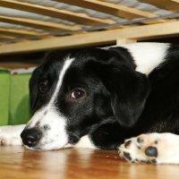 Собака Долька :: Freewind