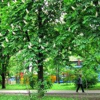 Повседневная весна ) :: Людмила