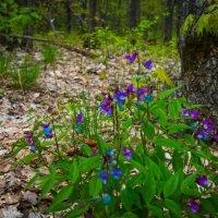 Весна в лесу :: Мария Букина