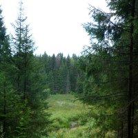 Лес спускается в лог. :: Марина Китаева