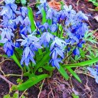 Весенние цветы. :: ВАЛЕНТИНА ИВАНОВА