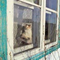 Кошка на окошке.. :: Galina ✋ ✋✋