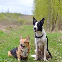собаки :: Наталия Кожанова