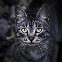 Лунный кот... :: Ангелина Хасанова