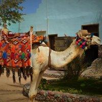 Египет.27.04.17. :: Schbrukunow Gennadi