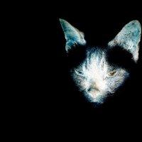 ЧернаЯ кошка,,,в темнОЙ комнате,,выхваченнаЯ ЗоркимЪ соколомЪ :: Юный Пионер Одиннадцатый