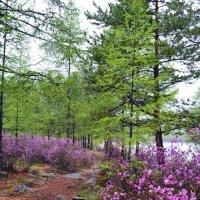 Сказочный лес прибайкалья :: Ольга