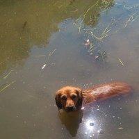 А ты идешь купаться ?! :: Наталья Денисова