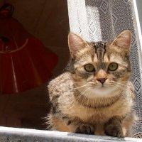 кошка в окошке :: Александр Прокудин