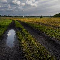 После дождя :: Виталий Павлов