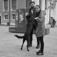 Это ваша собака? :: liudmila drake