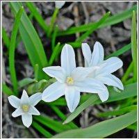 Мгновения весны * :: muh5257