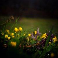 Цветы :: Кристина Юричковская
