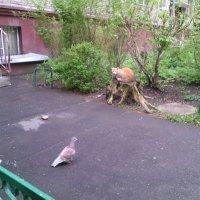 Птичка, ты кушать хочешь? :: Ольга Кривых
