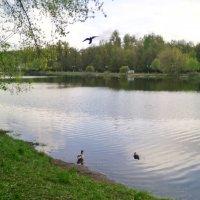 Наташинский пруд в мае 2017 года. :: Ольга Кривых