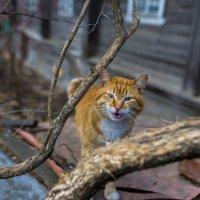 Мартовский кот :: Владимир Логинов