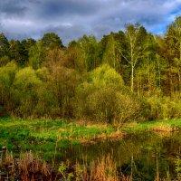 Краски весны :: Ирина Зубарева