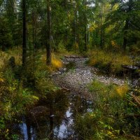 Лесной уголок :: vladimir Bormotov