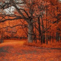 Красный лес :: Gene Brumer