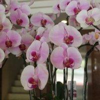 орхидеи :: maikl falkon