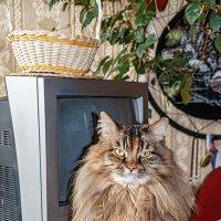 Тренируемся на кошках :: Юрий Яловенко