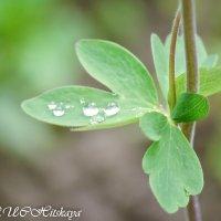 Капли дождя :: Yelena LUCHitskaya
