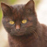 Кошка-кошка :: Yelena LUCHitskaya
